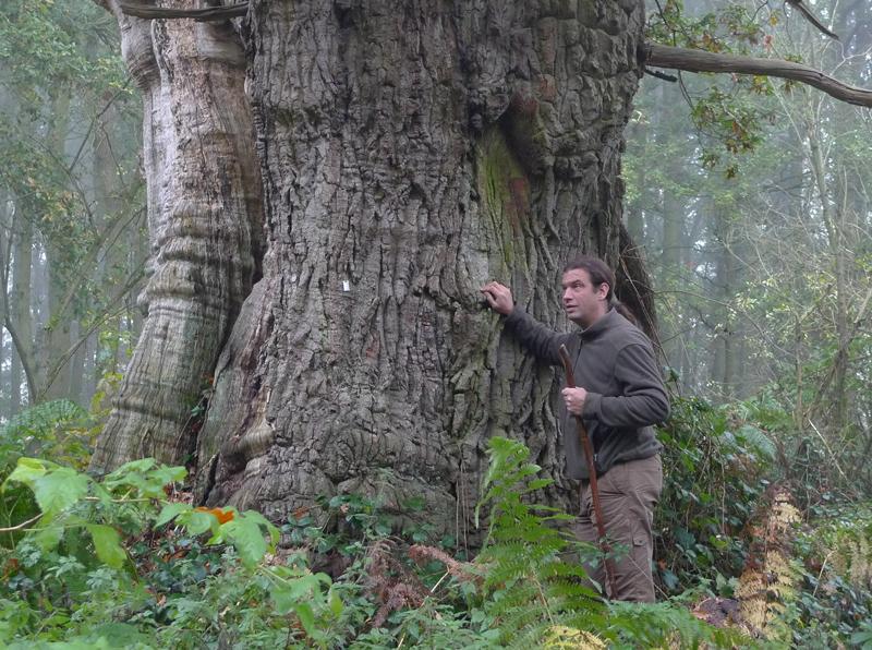 Geronimo bostochten eeuwenoude bomen ervaren